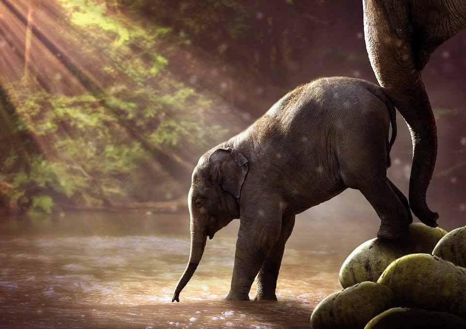 Nombres para elefantes