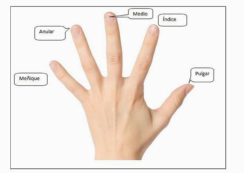 nombres dedos mano