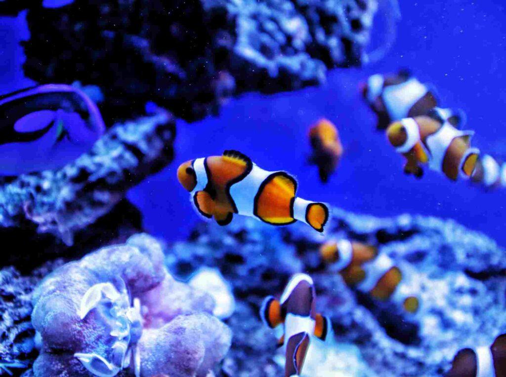 Nombres creativos de peces